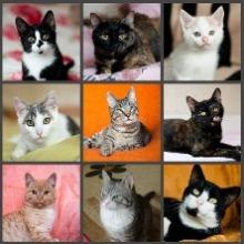 любой рацион для кошек
