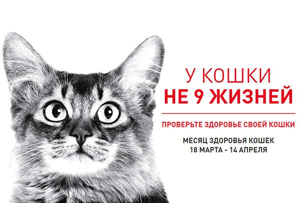 Инициатива «У кошки не 9 жизней» продолжается