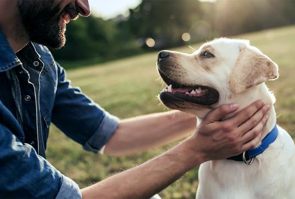 Eukanuba провела опрос о любви между владельцами и их собаками