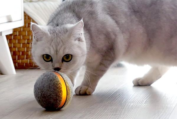Компания Cheerble представила «умный» мяч для собак и кошек