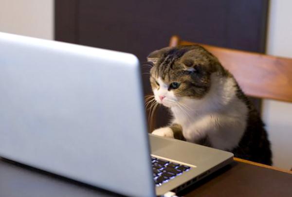 В России чаще покупают онлайн корма для кошек