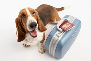 В мае ветеринарные специалисты расскажут о правилах перевозки домашних животных по стране и за границу