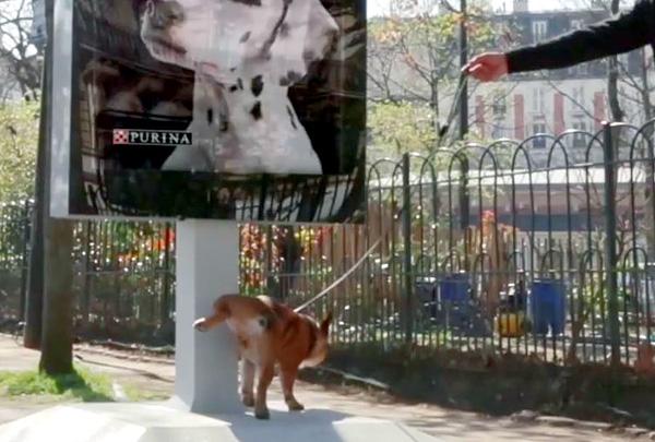 Purina установила в Париже билборды для определения состояния здоровья собак