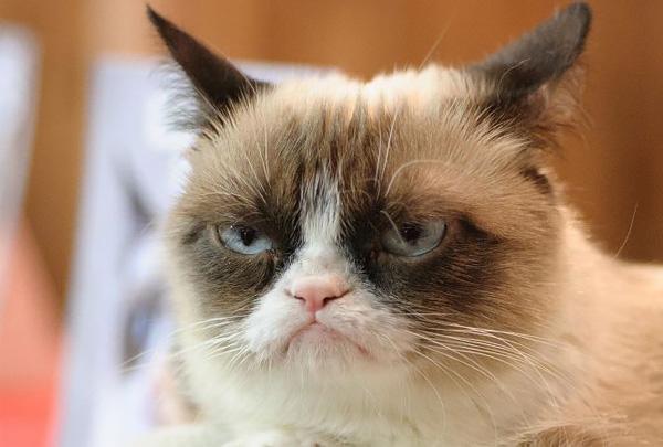 Умерла одна из самых богатых медийный кошек нашего времени
