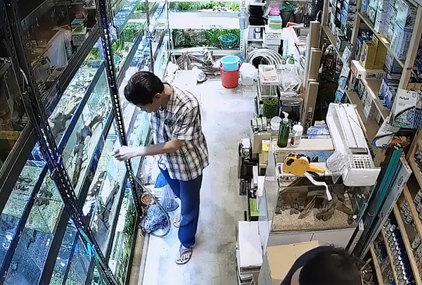 В Сингапуре посетитель зоомагазина отравил аквариумных рыбок