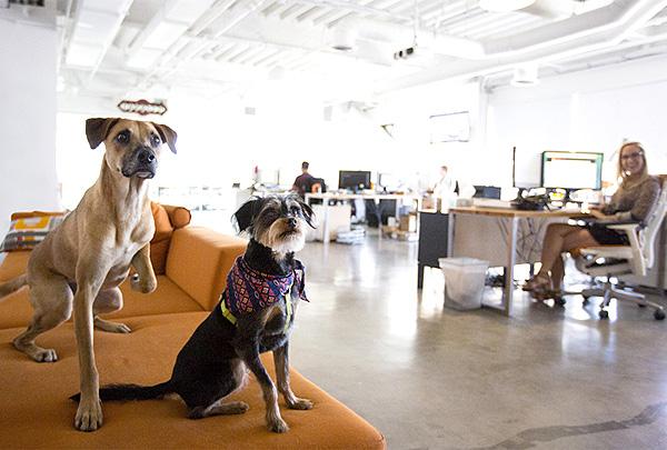 Согласно опросу, людям нравится работать в офисе со своими питомцами