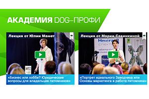 Начала работать онлайн-академия DOG-ПРОФИ