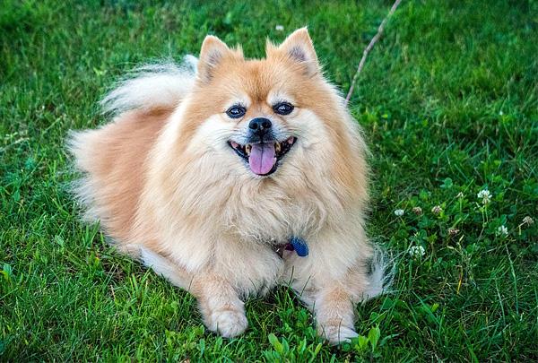 Суд обязал ветклинику выплатить 300 тысяч рублей владельцам погибшей собаки