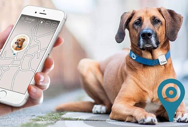 Трекеры для животных «знают» больше о владельцах, чем о собаках