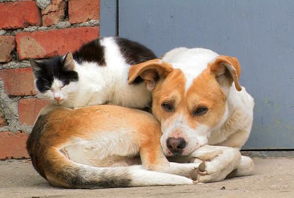 17 августа отмечается Всемирный день бездомных животных