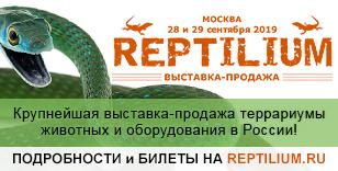 В Москве пройдёт выставка «Рептилиум»
