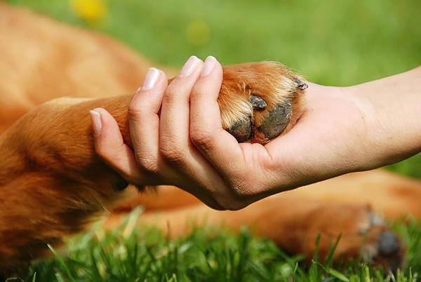 В Сокольниках пройдёт круглый стол «Взаимодействие как основа эффективных решений в вопросе обращения с животными»