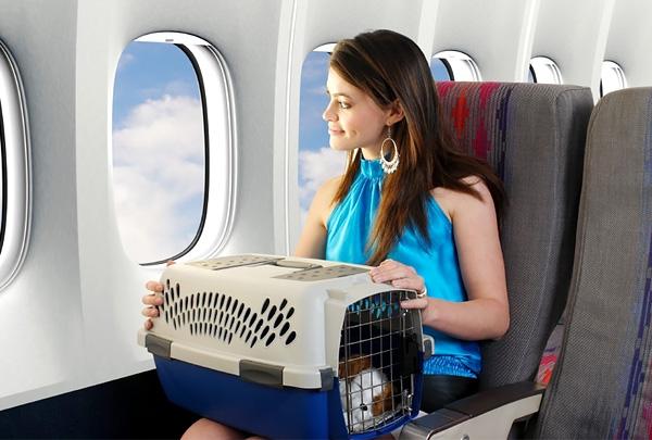 Минтранс отменяет ВСД для домашних животных