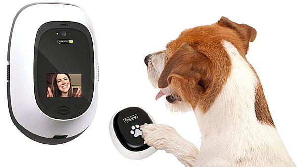 Компания PetChatz запускает видеофон PetChatz HDX