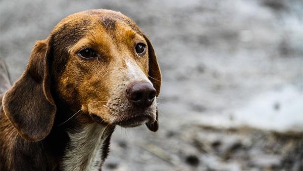 Новые правила отлова запрещают убивать безнадзорных животных
