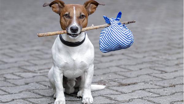 В Британии ищут двух собак на роль «инспекторов»