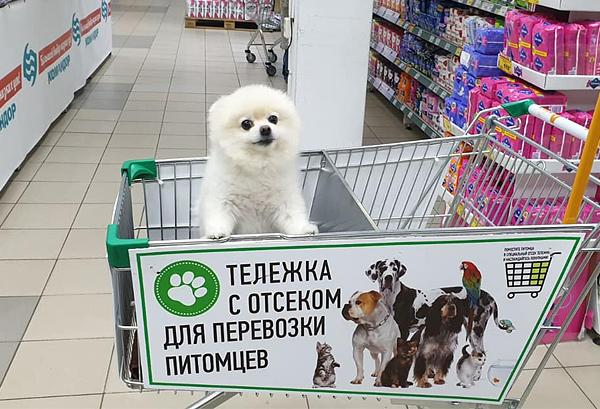В Красноярске в магазин «Аллея» можно прийти с собакой