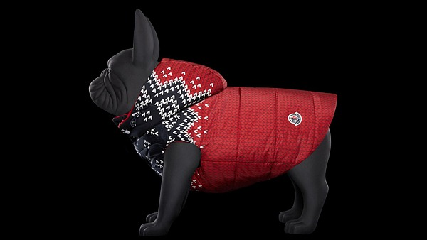 Люксовый производитель верхней одежды Moncler Genius выпустил пуховики для собак