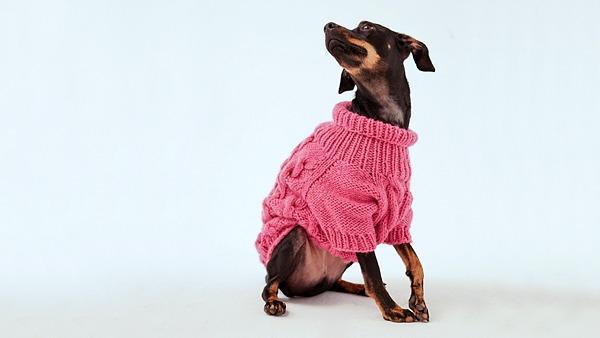 В России запустили коллекцию свитеров для собак и их хозяев от Mirstores и I Love Dogs