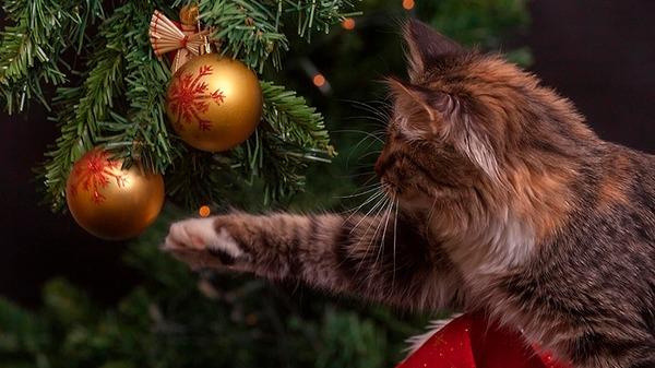 Составлен рейтинг самых озорных пород, «помогающих» праздновать Рождество