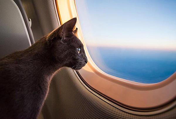 American Airlines отменила перевозку животных в багажном отделении