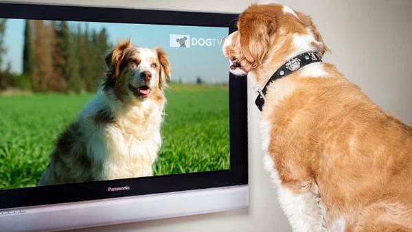 DOGTV теперь бесплатно