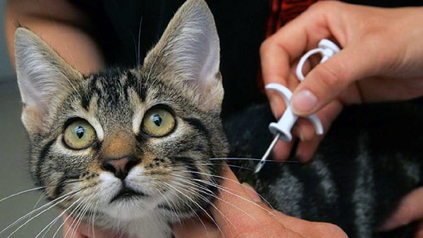 Обсуждается законопроект о маркировке домашних животных