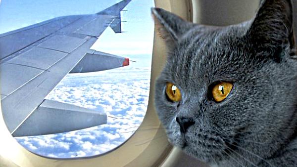 РСН запустил оформление электронных документов на вывоз животных