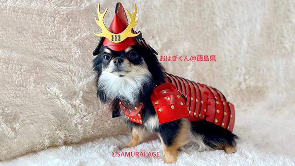В Японии расширяют ассортимент самурайских доспехов для животных