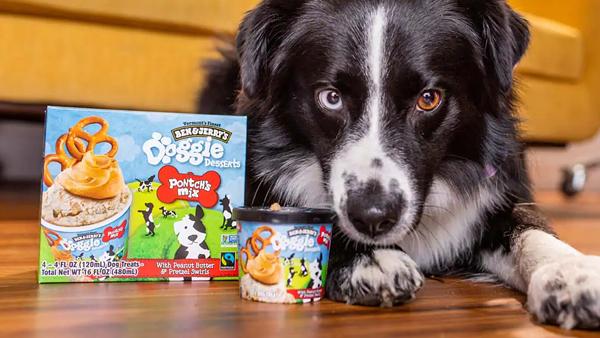 Люксовое мороженое Ben Jerrys теперь делают и для собак