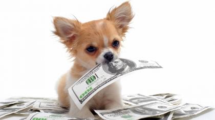 В Америке подсчитали примерную стоимость содержания собак