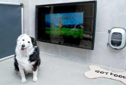 В США зоогостиницы Best Friends Pet Care начали предлагать услуги видеочата и дистанционного угощения