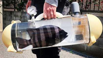 В Японии разработали переноску для живой рыбы